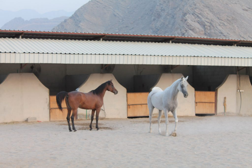 house ride in khasab farm house